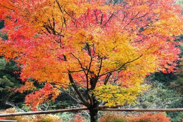 五家荘の紅葉