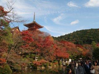 遇上藍天配紅葉,雖然紅葉還沒有全開,但仍然很美。