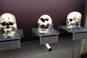 Skulls of our ancestors at the Okumatsushima Jomon Village Museum