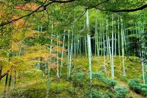 多宝殿の奥にある竹林