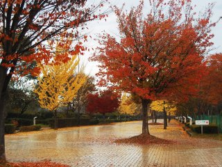 Feuillage d'automne au Parc Muse