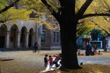 <p>The campus is open to public, so a lot of people come during the gingko season. Children seem to love playing with the leaves.</p>