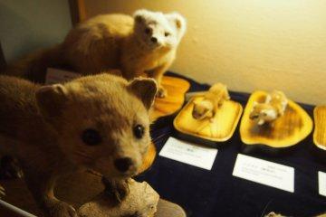 Small mammals in Shiretoko.