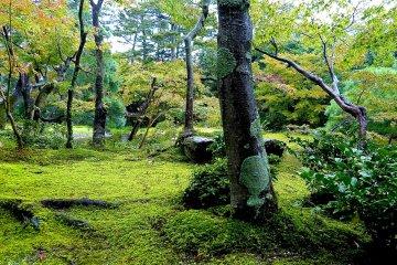 <p>Moss-coated area</p>