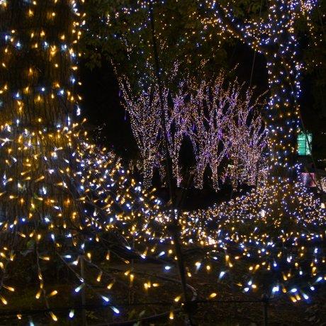 แสงเปล่งประกาย ณ ชินจูกุ เทอเรส