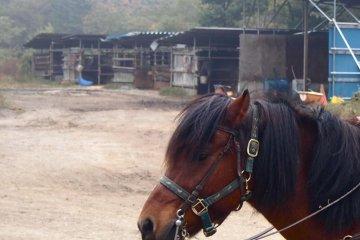 Kiso Horse Ranch