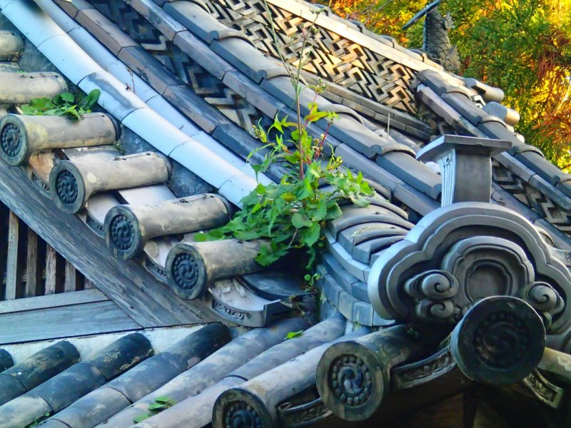 <p>A small plant clings to some roofing tiles.</p>