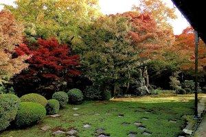 Jardim do Norte: Padrão de xadrez coberto de musgo gradualmente fica verde