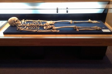 <p>Maybe we&#39;ll have our skeletons in a museum in a thousand years or so, too.&nbsp;</p>