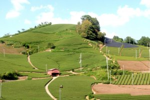 Wazuka's tea fields is just a day trip from Kyoto