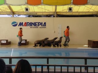 The sea lion show is very popular. Its laughs and applause can be heard throughout the plaza.