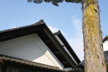 The Sake Cellar