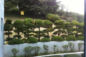 Manicured bonsai like trees