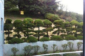 Manicured bonsai like trees