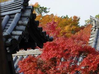 가을색이 아름답다