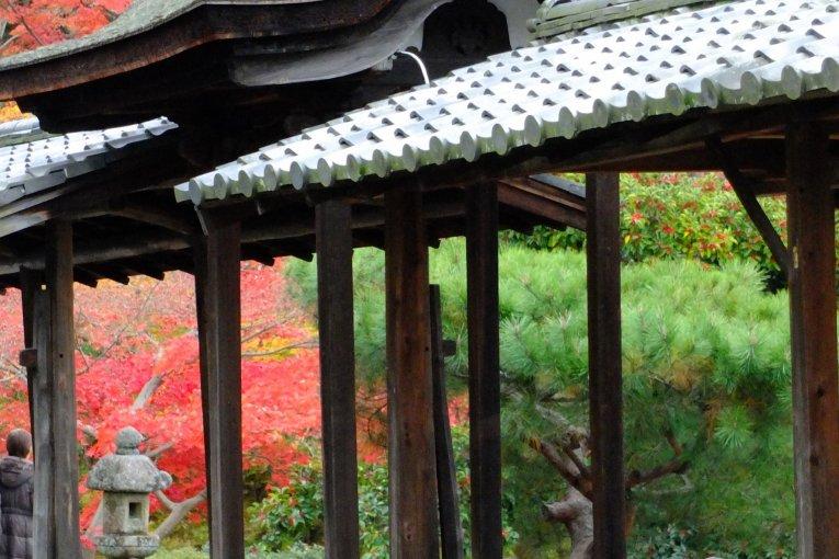 Kodai-ji Temple's Lovely Grounds
