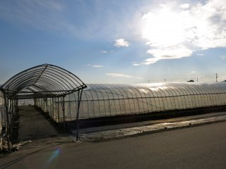 A view of another strawberry greenhouse at sunset