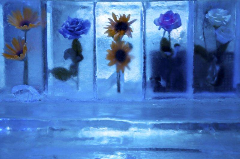 벽, 바, 탁자, 벤치 등 안에 있는 모든 것들은 순수한 얼음으로 만들어진다