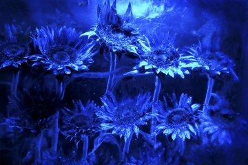 얼음 덩어리 안에 갇힌 꽃들은 이 독특한 술집에 장식이 되어 있다