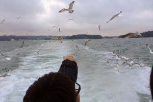 Seagull feeding on a boat tour of Matsushima Bay.