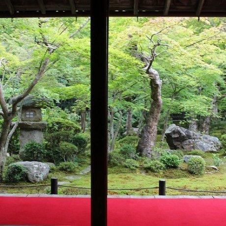 京都一乗谷「圓光寺」