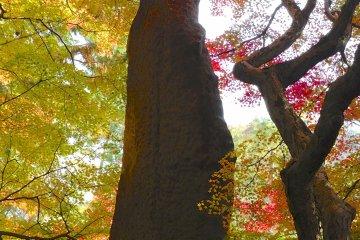 วัดและสวนคอนจิอินในเกียวโต