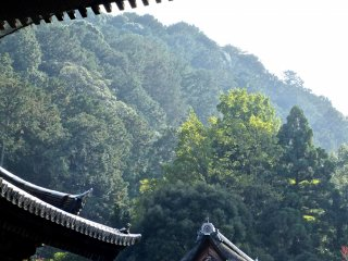 The beauty of Japanese temple roofs