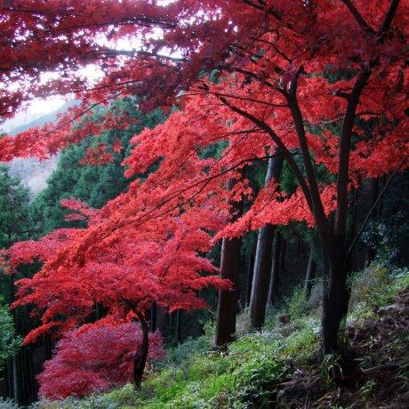 Oyama in Autumn