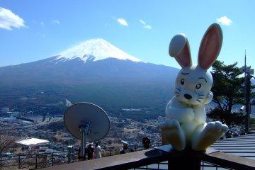<p>กระต่ายผู้รักความยุติธรรมกับภูเขาไฟฟูจิในมุมที่ต่างออกไป</p>