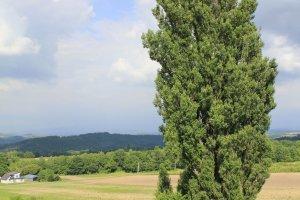 แวะถ่ายรูปต้น Ken and Marry Tree