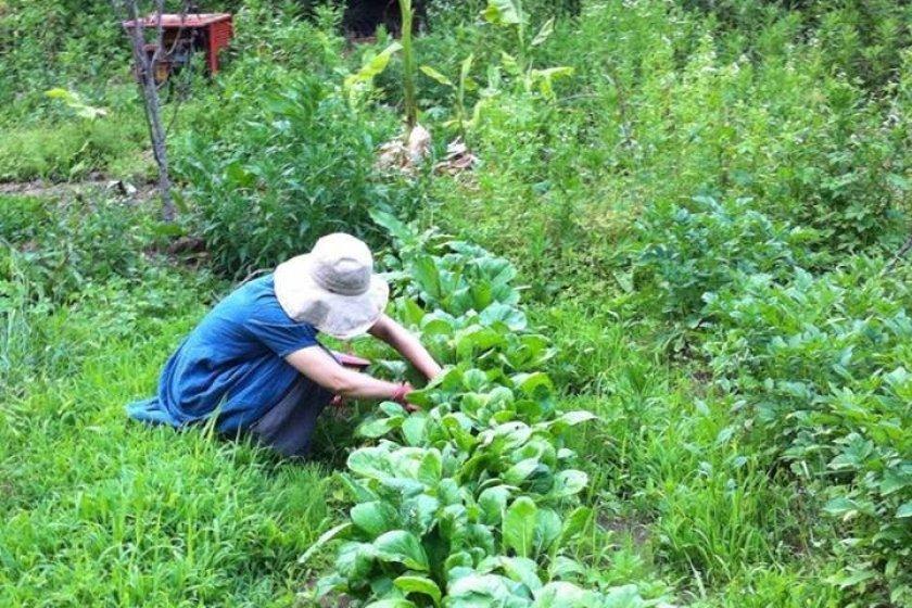 เราปลูกผักและหญ้าไปพร้อม ๆ กัน เพราะดินจะหนาว และแห้ง หากไม่มีอะไรมาห่มเธอเอาไว้