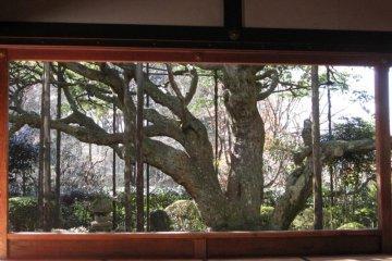 Hosen-in Temple in Kyoto