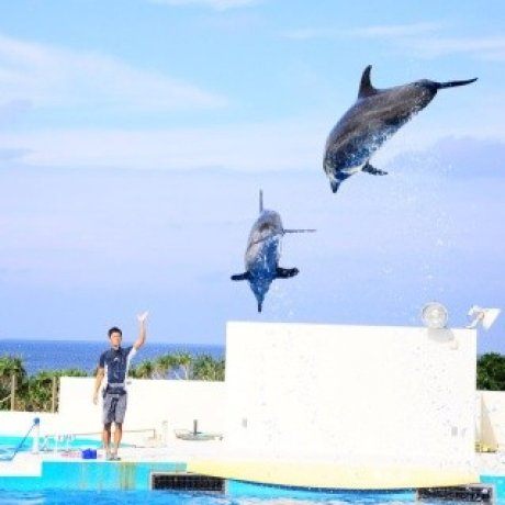 Okinawa เกาะสวรรค์ของญี่ปุ่น (2)