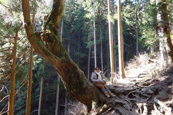ต้นไม้ใหญ่ริมทางเดิน