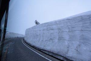 ยูคิโนะ โอทานิ เดือนพฤษภาคมที่ลดระดับความสูงเหลือประมาณ 10เมตร