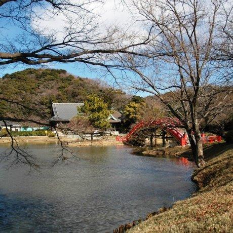 จากโยโกฮาม่าสู่คามาคูระ