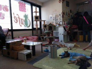 The cafe features cats, their toys, a drink bar, snacks, as well as places for the human visitors to sit and relax.