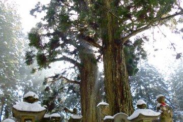 Koyasan ภูเขาศักดิ์สิทธิ์ในฤดูหนาว