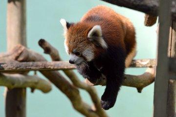 Chiba Zoological Park