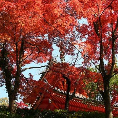 Templo Mitaki