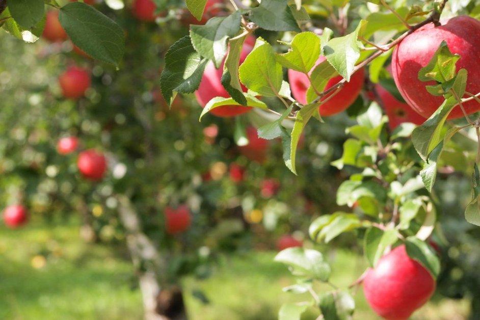 Takumi no Sato orchard