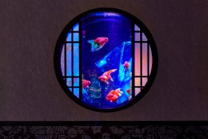 Art Aquarium Museum