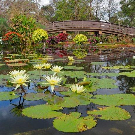 Mizu-no-Mori Water Botanical Garden