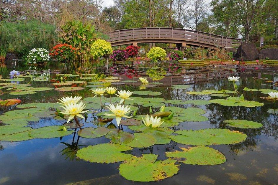Upper water lily pond at the Kusatsu City Aquatic Botanical Gardens