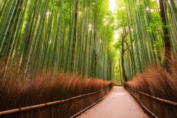 JapanTravel Special: Japan Photography Adventure, May 29 - June 7, 2019
