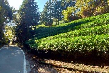 Kyoto and Nara Cycling Tour (self-guided)